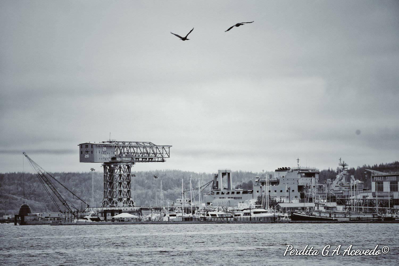 Perdita-Gudrun-Andrea-Acevedo-psns-crane-bw-waterfront.jpg